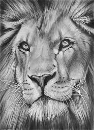 realistic lion face drawing.  Drawing Lion Pride Pencil Art Animal Drawings Coloured  Drawing Animals With Realistic Face