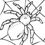 Small Picture Spider Woman Coloring Pages Atrinrayaneh Coloring Pages Image 15