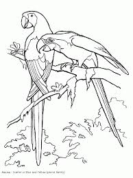 Small Picture Coloring Pages Toco Toucan Coloring Page Free Printable Coloring