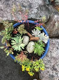 the other day i was picking up some fresh flowers at my local nursery flower and i spotted some super cute ideas for succulent planters that they have