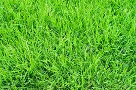 beautiful green gr for the best nature background stock photo 25487936