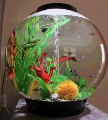 Small Fish Bowl Decorations biOrb 60 tropical or freshwater fish tanks amazing Betta 20