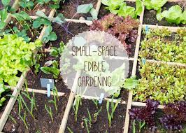 fruit vegetables in small spaces