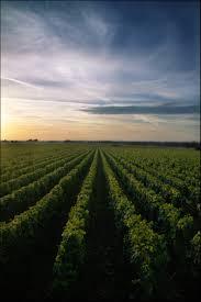 Kết quả hình ảnh cho  CLOS SAINT VINCENT wine