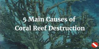 coral reef destruction common causes of coral degradation