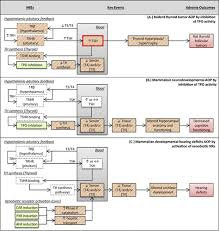 Hormone Cascade Chart Evaluating Chemicals For Thyroid Disruption Opportunities