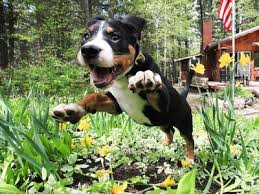 how to keep dogs out of flower gardens