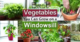 best garden vegetables. Garden Vegetables Windowsill Vegetable Gardening Best To Grow On Balcony Web