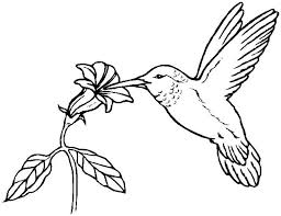Small Picture Best Hummingbird Coloring Pages Gallery Colori 7268 Unknown