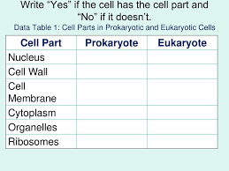 Ppt Prokaryotic Versus Eukaryotic Cells Powerpoint