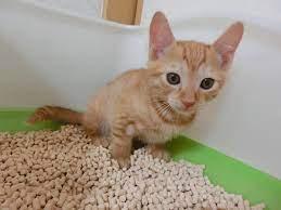 子猫 うんち が ゆるい