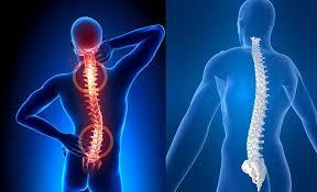 Imagini pentru coloana vertebrala