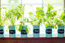 an indoor window sill herb garden