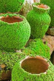Reubens Lawn Care: How To Make Your Own Moss Landscape Rock And ...