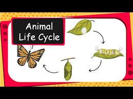 Science Animal Life Cycles English Youtube