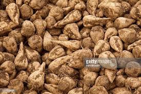 Image result for sugar beet images