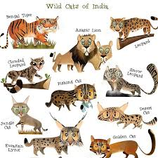 Tiger Panthera Tigris Classification Wild Cat Family