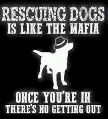 animal rescue quotes and sayings. Simple And Throughout Animal Rescue Quotes And Sayings U