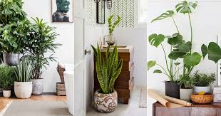 Plant Interior Design Custom Decoration