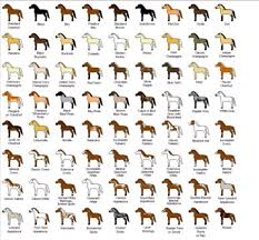 Awesome Horse Color Chart Discussions Rodeo Spalding Labs