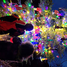 Christmas Tree Lighting Anchorage Solstice Tree Tour Nordic Skiing Association Of Anchorage