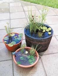 container water garden. Perfect Garden Intended Container Water Garden D