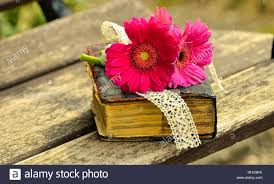 an old book and a beautiful flower