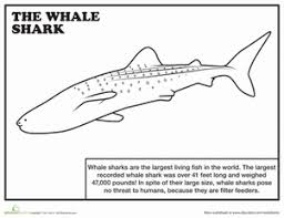 Small Picture Whale Shark Worksheet Educationcom