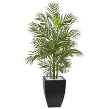 Areca Palm Tree with Black Wash Planter UV Resistant (Indoor