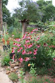 our top 10 native plants for houston