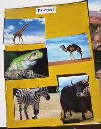 diurnal animals list for kids. Exellent List Throughout Diurnal Animals List For Kids M
