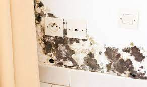 how to get rid of black mould and damp