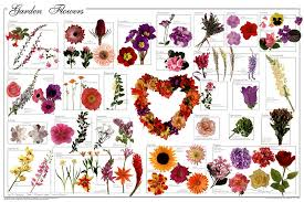 all are arranged by botanical order then by family as almost all por flowers are hybrids biological names are not applicable