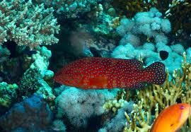 Duiken Algoa Bay