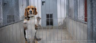 animal experimentation animals  animal experimentation