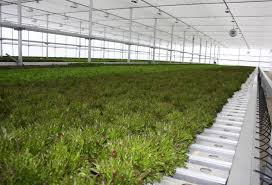 john bonner s factory floor is a sea of leafy greens lettuce basil water cress and arugula packed in neat rows he co founded great lakes growers with