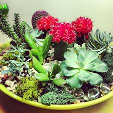 Small Picture Succulent And Cacti Dish Garden In House Garden Design Pinterestl