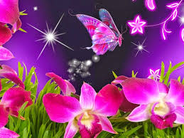 most beautiful butterflies in the world animated. Delighful Butterflies Most Beautiful Butterflies In The World Animated  Photo14 In Beautiful Butterflies The World Animated U