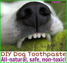make your own diy dog toothpaste right at home