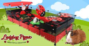 ladybug pignic cagetopia creations
