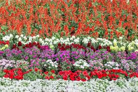 Small Picture Flower Garden Design Basics