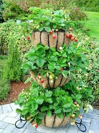 how to grow a strawberry plant from best planters ideas on wooden crate planter wood be