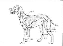 Acupressure For Canine Hip Dysplasia