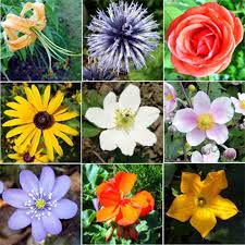 kinds of flowers names and pictures
