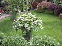 Japanese Garden Plants Watch Year Japanese Garden Plants Names For More Information About