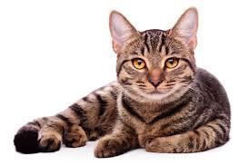 Lustige Kurze Katzensprüche Für Facebook Whatsapp Und Co