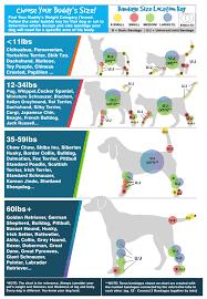 Animal Chakra Chart Universal Joint Bandage