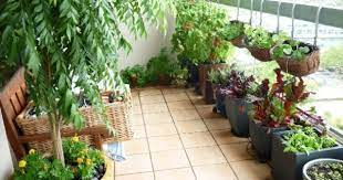 want to set up kitchen garden on your