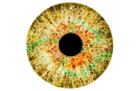 Pics Of Eyes Lab Grown Human Retinas Illuminate How Eyes Develop Color Vision
