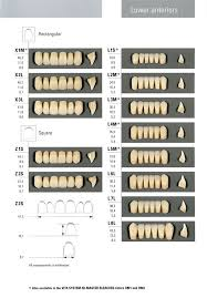 Vita Physiodens Mold Chart Specialty Tooth Supply Ltd